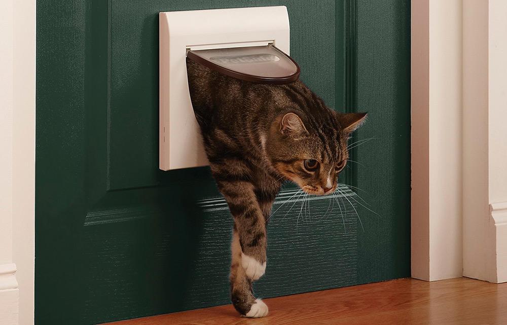 Дверь для кошки : своими руками или готовый вариант? Ваши Питомцы