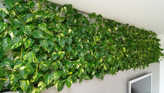 Растенияпод потолком