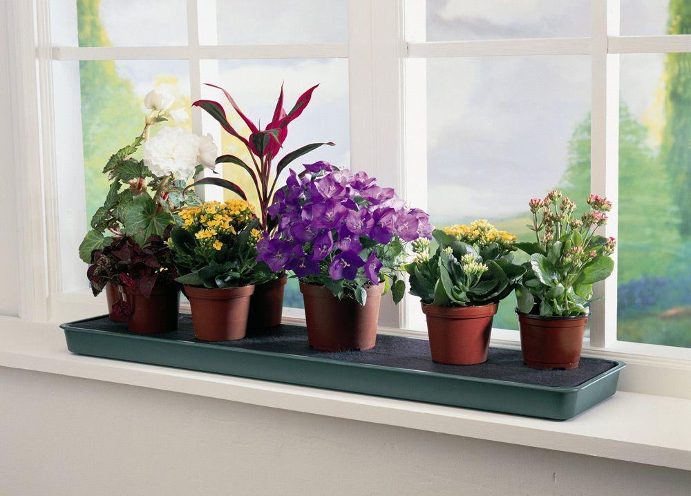 Фото домашних цветов в горшках