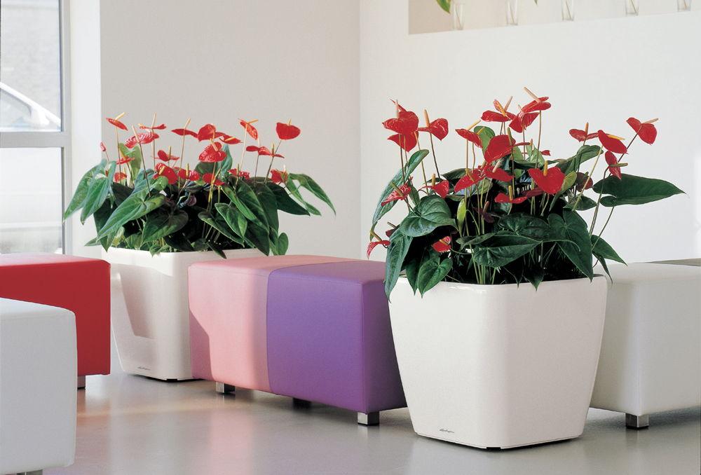 Кашпо с цветами в комнате