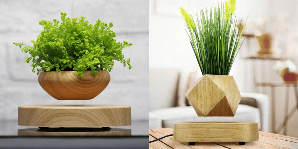 Растения с АлиЭкспресс