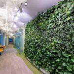 Стена из растений в интерьере