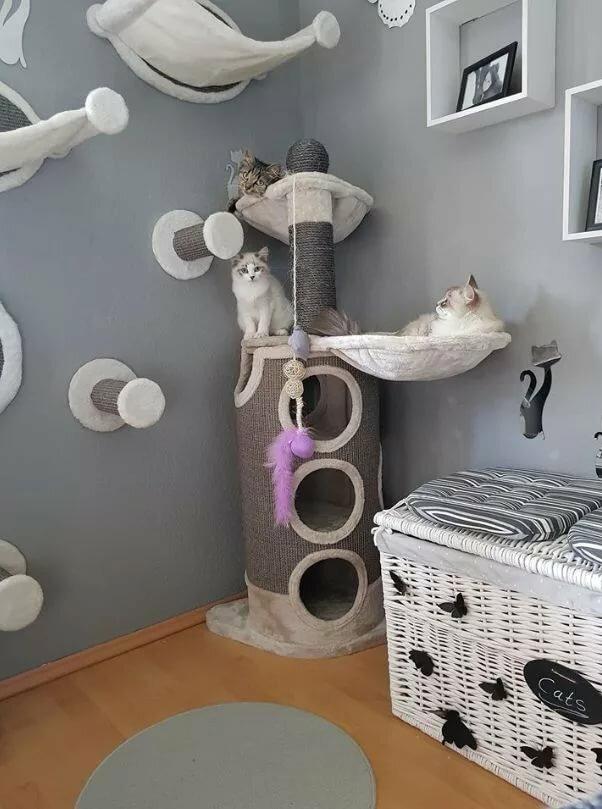 дизайн комнаты для кошек фото надо попросить