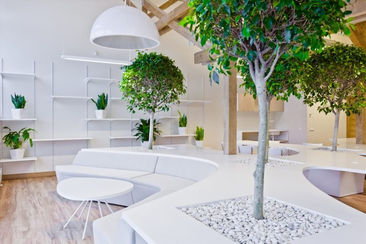 Живые деревья в интерьере